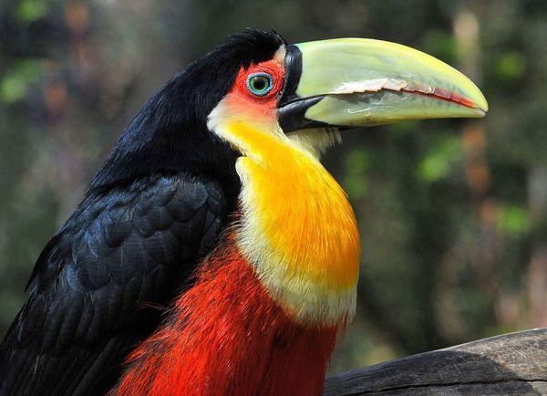 Семейные обязанности у разных видов птиц